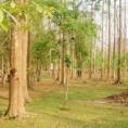 Положительный и отрицательный опыт земельных инвестиций