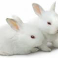 Как мы выращивали кроликов