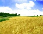 Инвестиции в земли сельскохозяйственного назначения