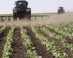 Узбекистан планирует начать выращивать в РФ сельскохозяйственные культуры для своего рынка